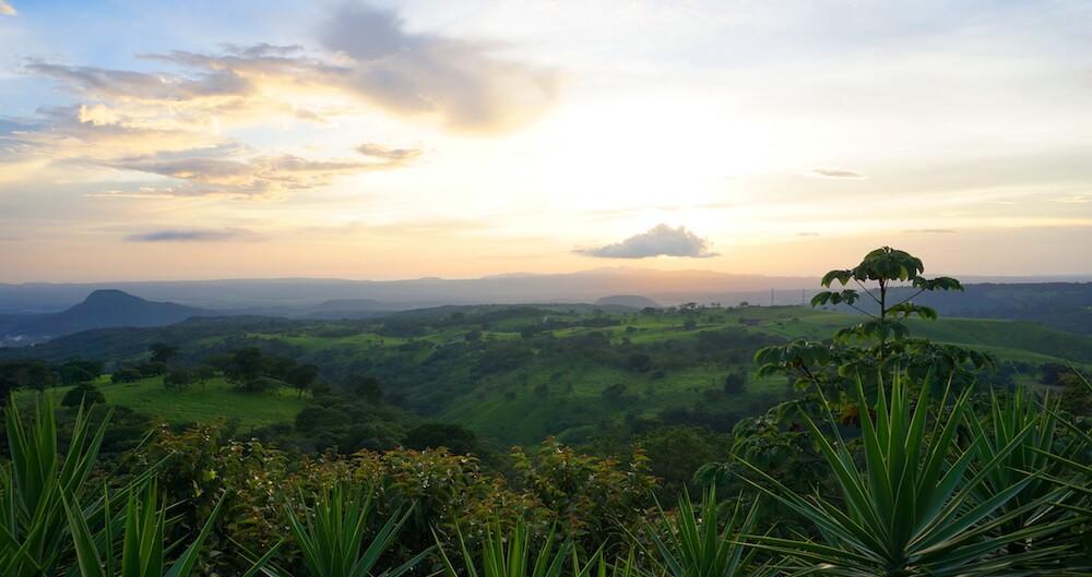 Biodiversität Artenvielfalt Nachhaltigkeit